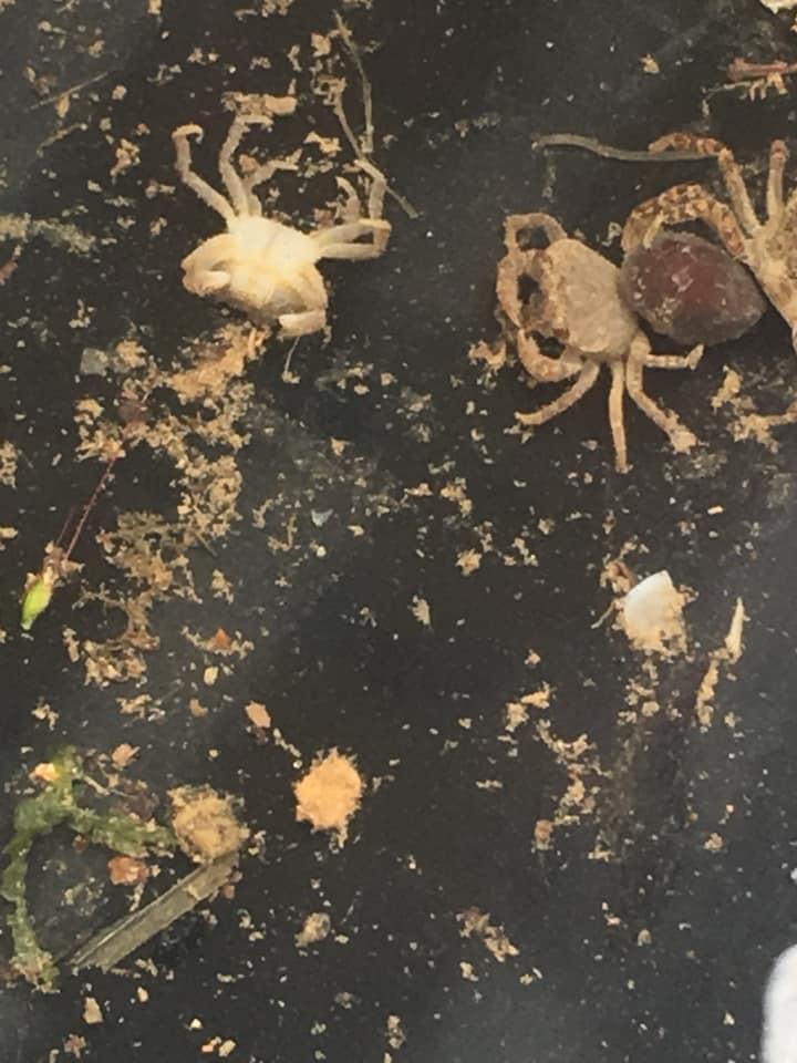 「第1回 みかん山にはどんな生き物がいる?」ーー水性生物調査ーー