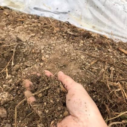 「太陽熱養生処理で土は変わった?」